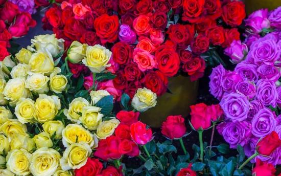 cveta-roz1.jpg